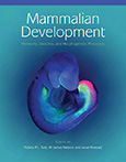 Mammalian Development: Networks Switches and Morphogenetic Processes